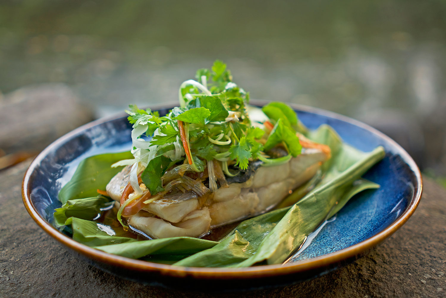 Snakehead fish steamed in ginger