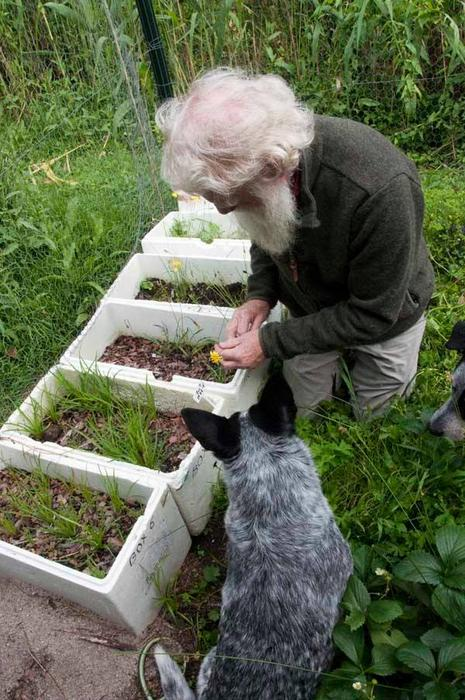 Bruce Pascoe propagating murnong seeds with the help of a friend