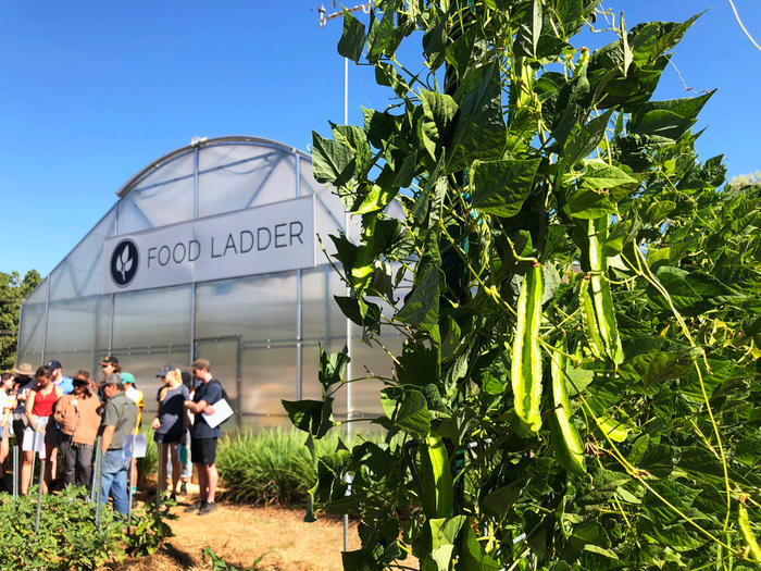 Food Ladder uses hydroponics and sustainable technologies to help feed communities – and create jobs and other opportunities.