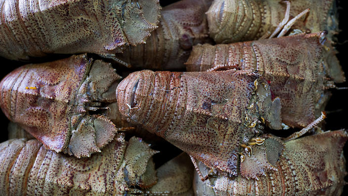 Moreton Bay bugs from Bowen in tropical North Queensland are a local delicacy.
