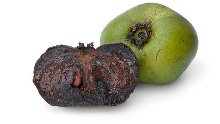 Native to the Amazon but grown in Northern Queensland, the black sapote fruit is famous for its chocolatey colour, texture and taste.