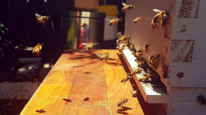 Beekeeping 101 How To Setup Or Adopt Your Own Hive Sbs Food