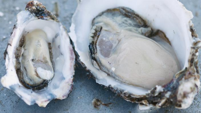 Oysters side by side Tasouth