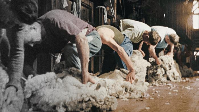 Australia in Colour, shearers