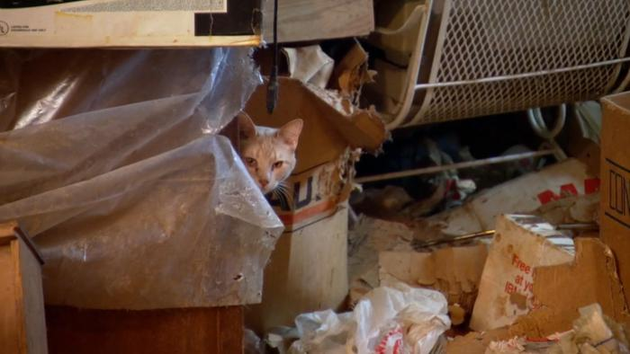 Far from car-crash TV, 'Hoarders' explores a misunderstood disorder