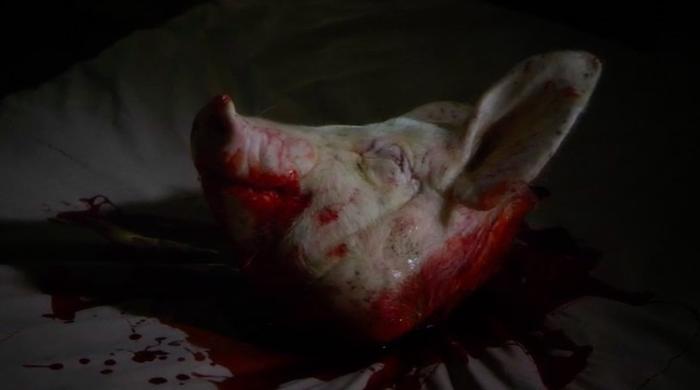 hard pig head