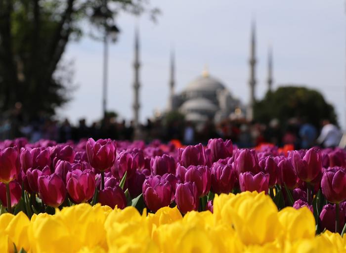 10th Tulip Festival in Istanbul