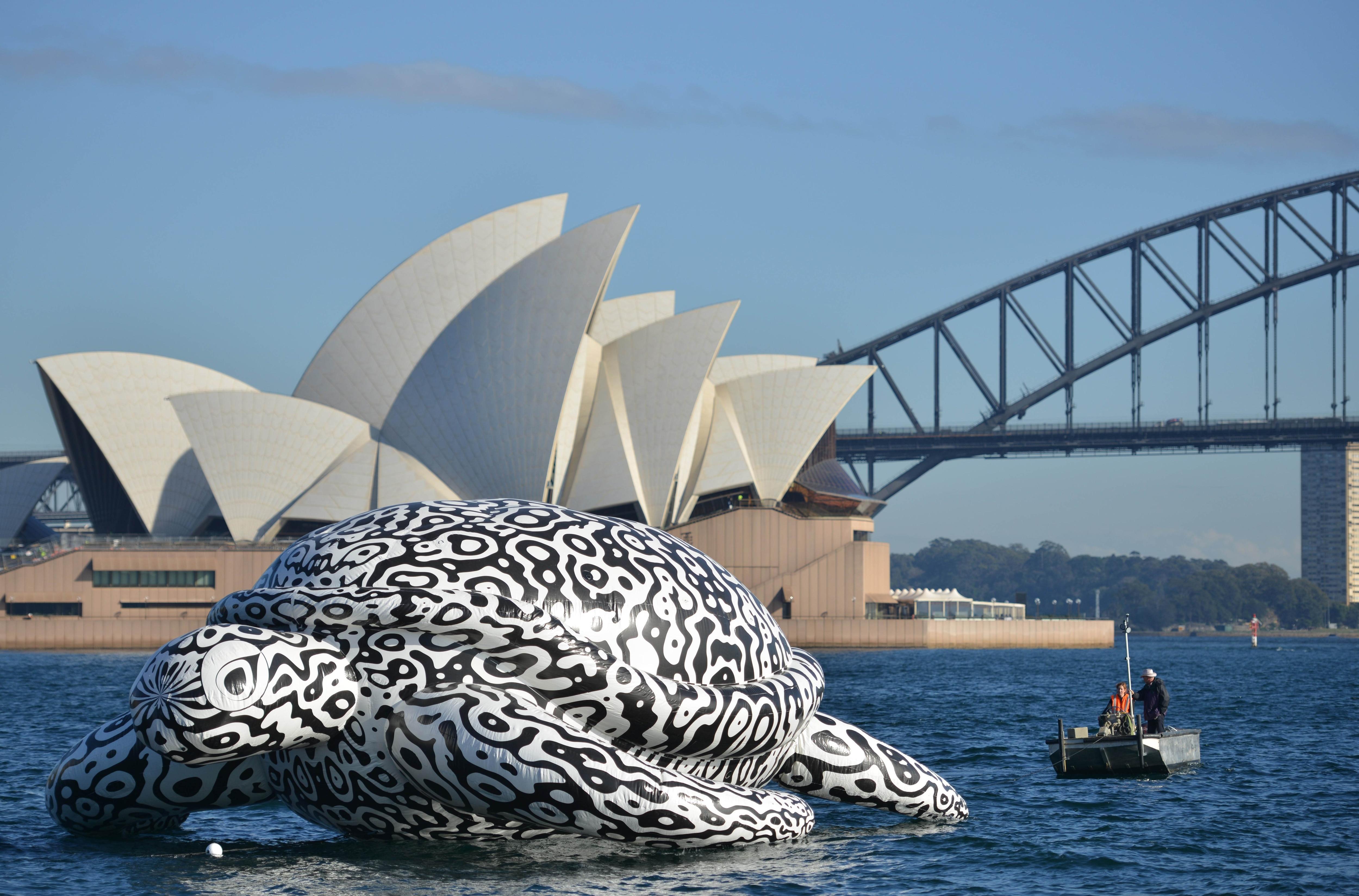 Giant Floating Turtle Quot Alphie Quot Explores Sydney Harbour