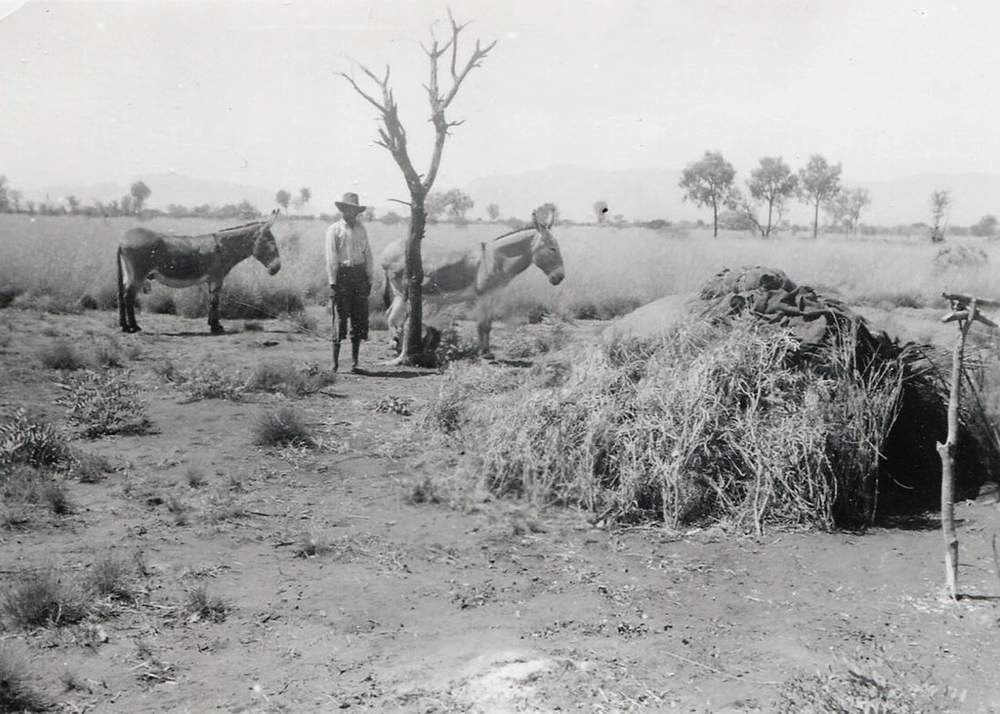 A man with two donkeys at Haasts Bluff, NT c. 1950s. (Image: Lutheran Archives, Collection P0352207213)