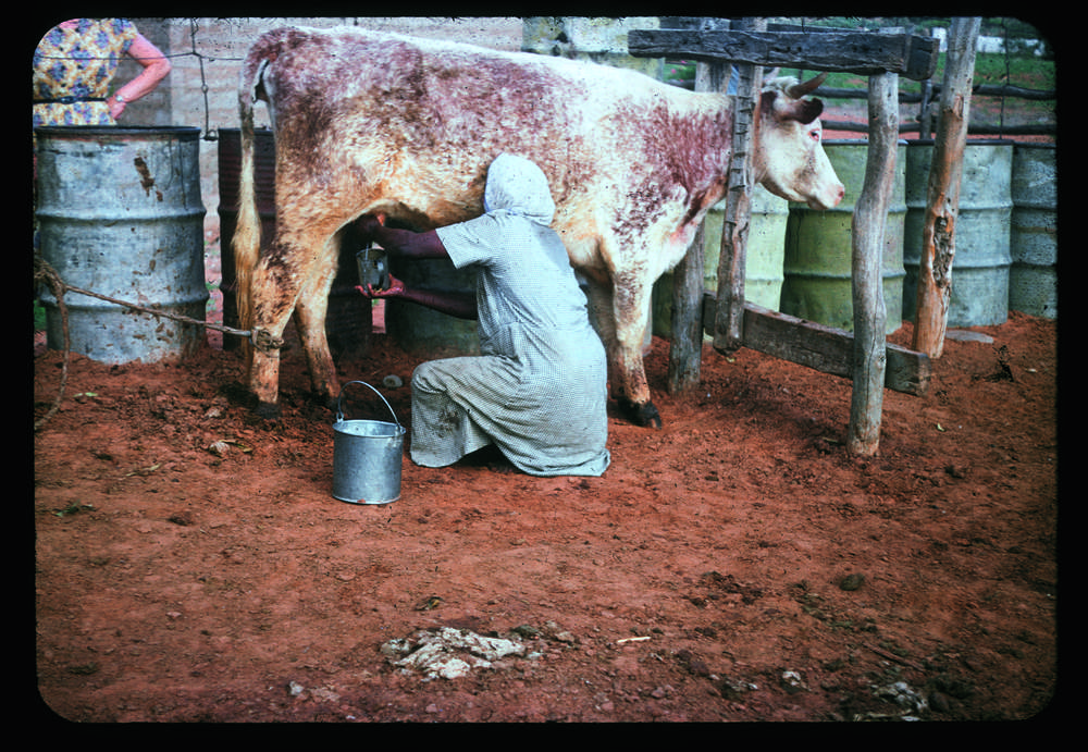 'I show'em about milk', Hermannsburg. (Image: Courtesy of Strehlow Research)
