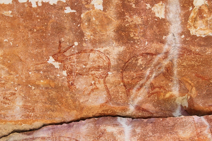 Two Maliwawa style depictions of back-to-back animals more similar to bilbies than any known Arnhem Land creature, Awunbarna. The figure on the left is 0.50 metres wide by 0.53 metres high