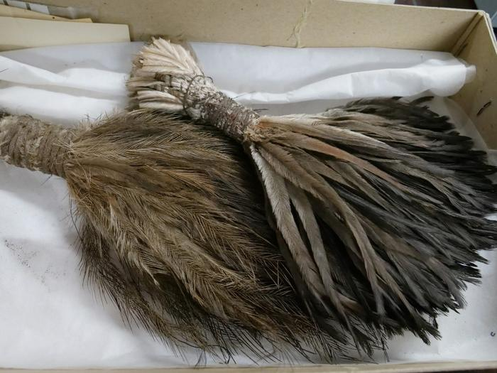 Ancient ceremonial feathers used for traditional practices, have been returned home