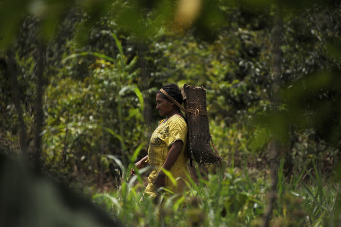 A native from the Piaroa ethnic group goes into the forest to collect wood on the outskirts of Puerto Ayacucho. The Piaroa natives live in the middle Orinoco Basin, in the Venezuelan Amazon region, with their main economic source being the selling of casa