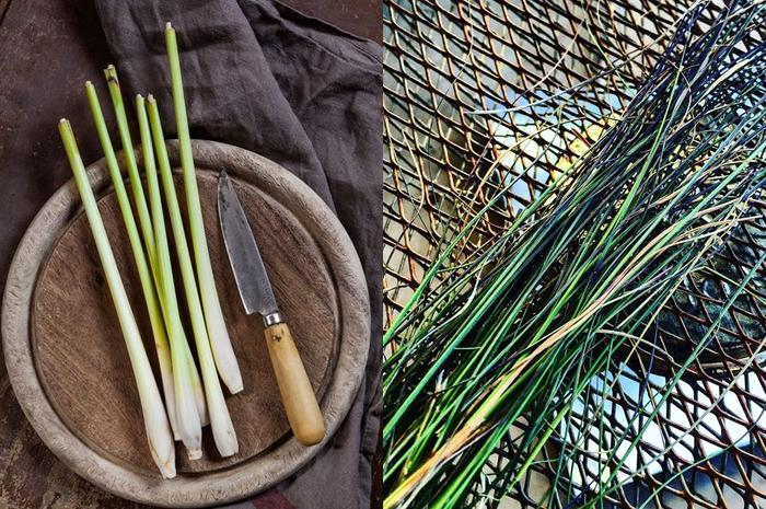 Indigenous Food On Country Kitchen Kriol Kitchen NITV Native Ingredients