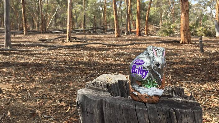 bilbies not bunnies how this endangered animal became our easter
