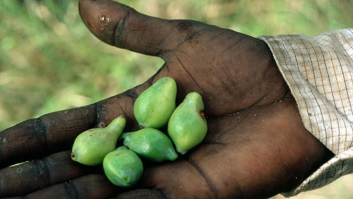 10 bush medicines that have been curing people for