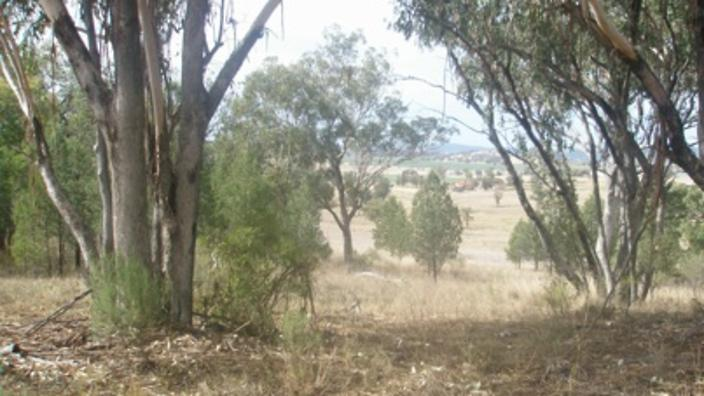 myall creek massacre Myall creek massacre – 1838 the myall creek massacre was one of many of indigenous people but, this particular massacre served as a big step forward in the equal .