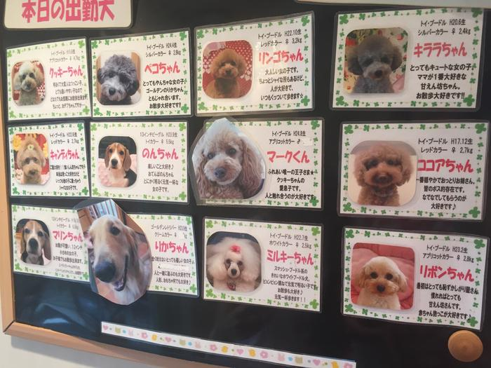 puppy cafe japan