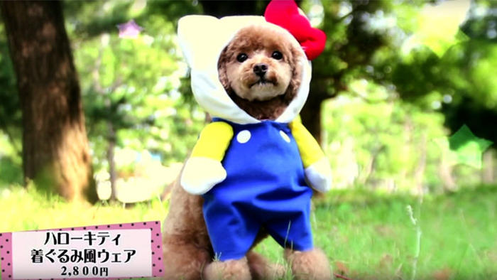 Hello Kitty cosplay for dogs
