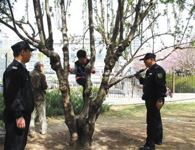 Tree climbing is being policed