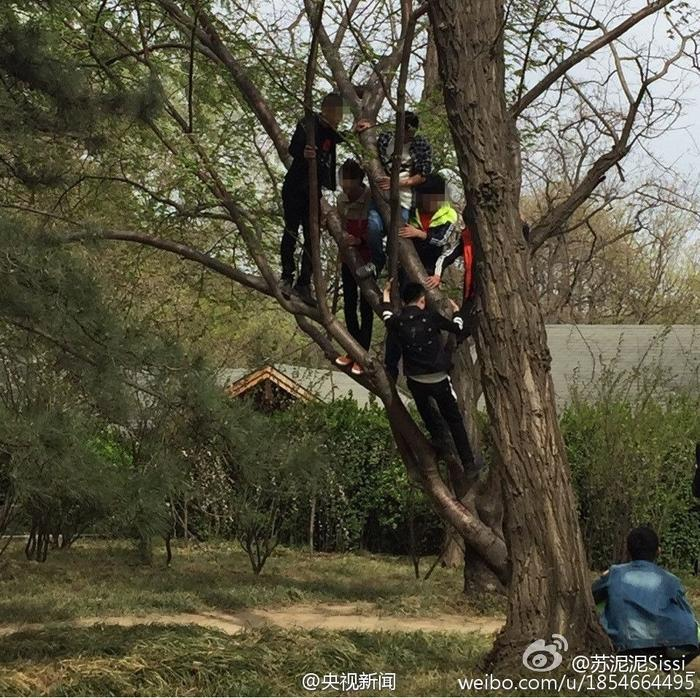 A group of young people climb a tree