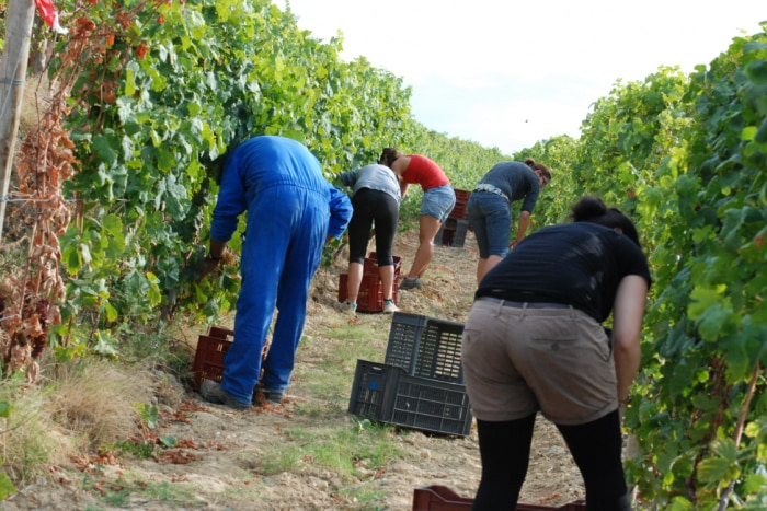 Fruit and vegetable picking jobs are often underpaid.