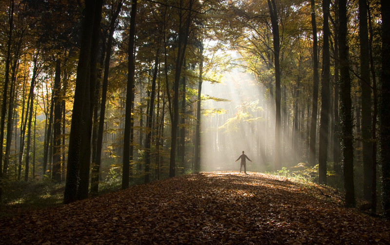 How Nature Helps Your Brain Sbs Life