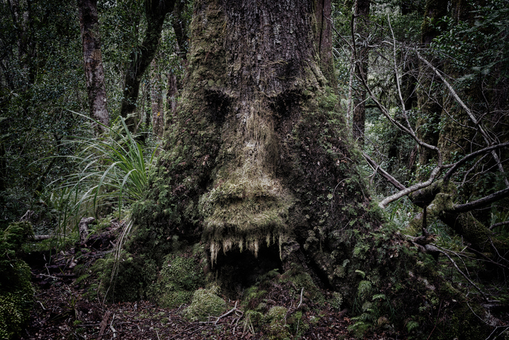 The World S Most Dangerous Tree Will Harm You In Many Ways