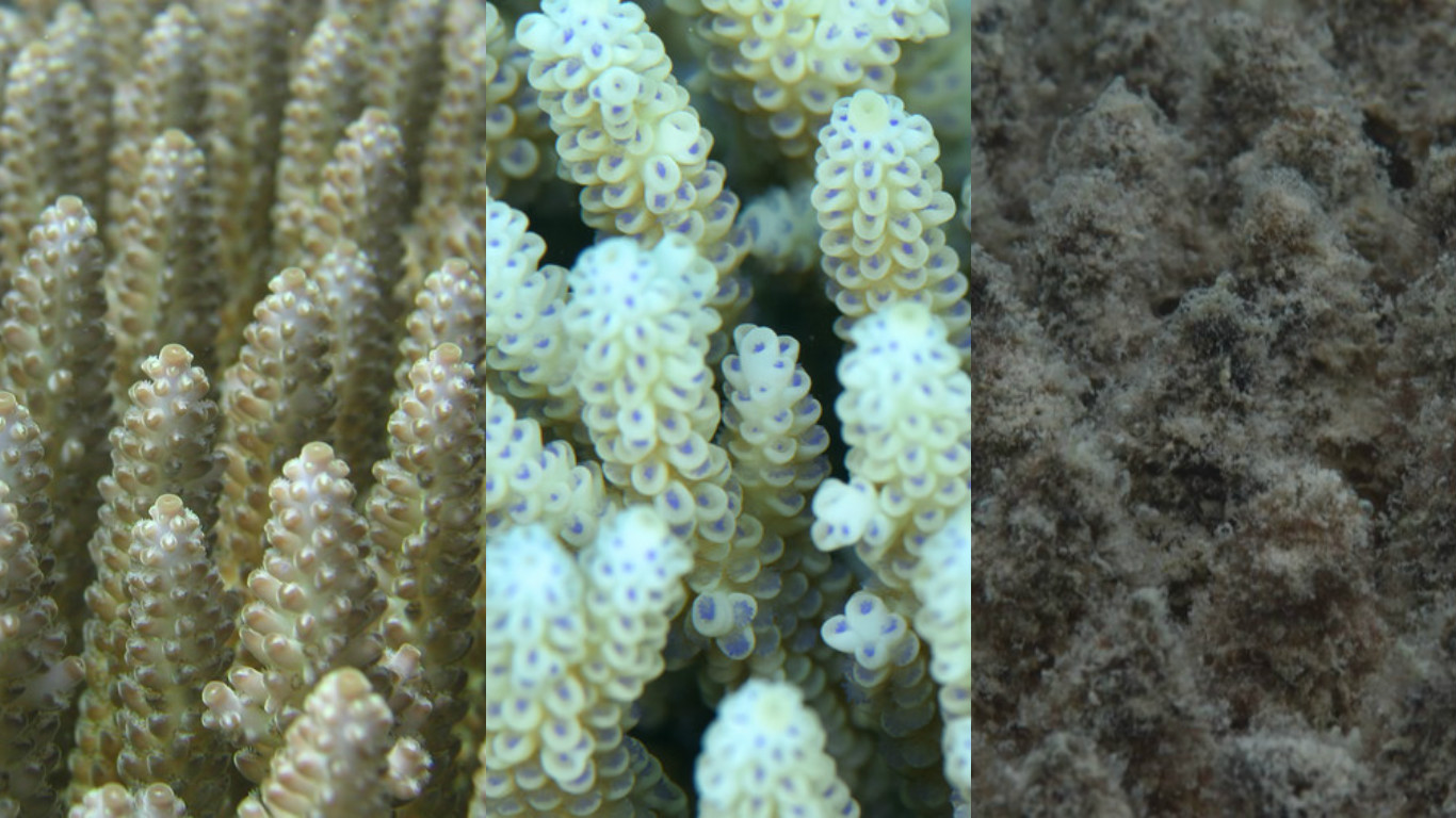 bleaching away the beauty of coral Coral reefs represent some of the world's most spectacular beauty spots, but they are also the foundation of marine life: without them many of the sea's most exquisite species will not.