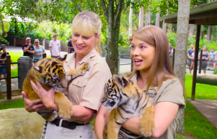 how to get to steve irwin zoo from brisbane
