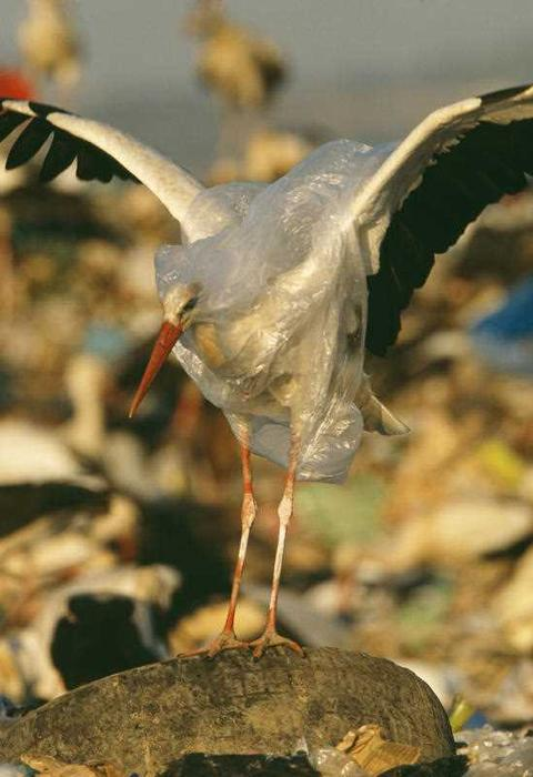 storks and rubbish