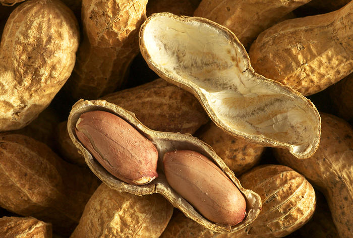 Groundnuts / Peanuts - showing seed case