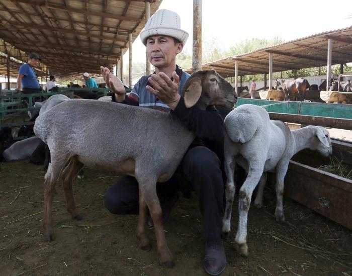 A Kyrgyz man prays next to a sheep at a local livestock market ahead of the Eid al-Adha in Bishkek, Kyrgyzstan, 11 September 2016.
