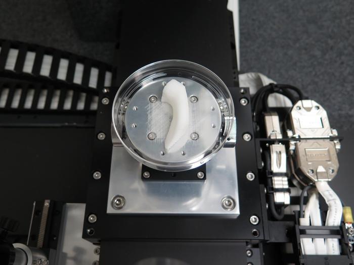 printing a jaw bone