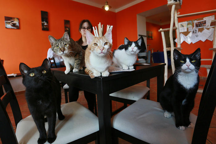 cat cafe in Czech Republic