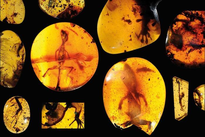 amber specimens of lizards and geckos
