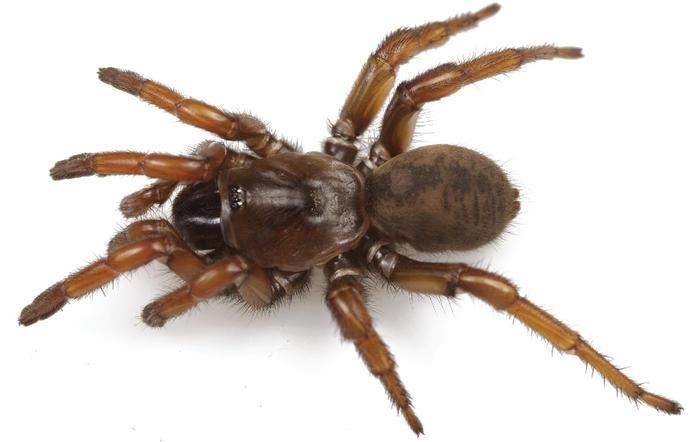angelina jolie spider