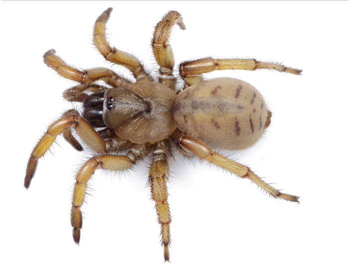 stephen colbert spider