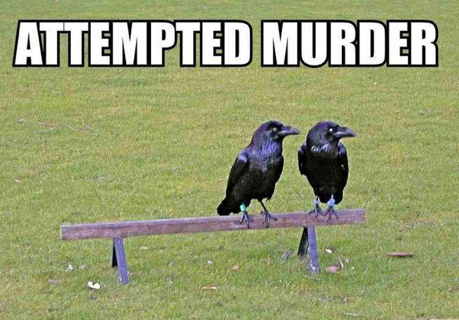 Attempted Murder meme