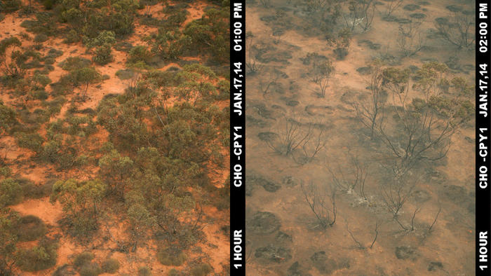 a patch of bushland showing the before and after of a bushfire