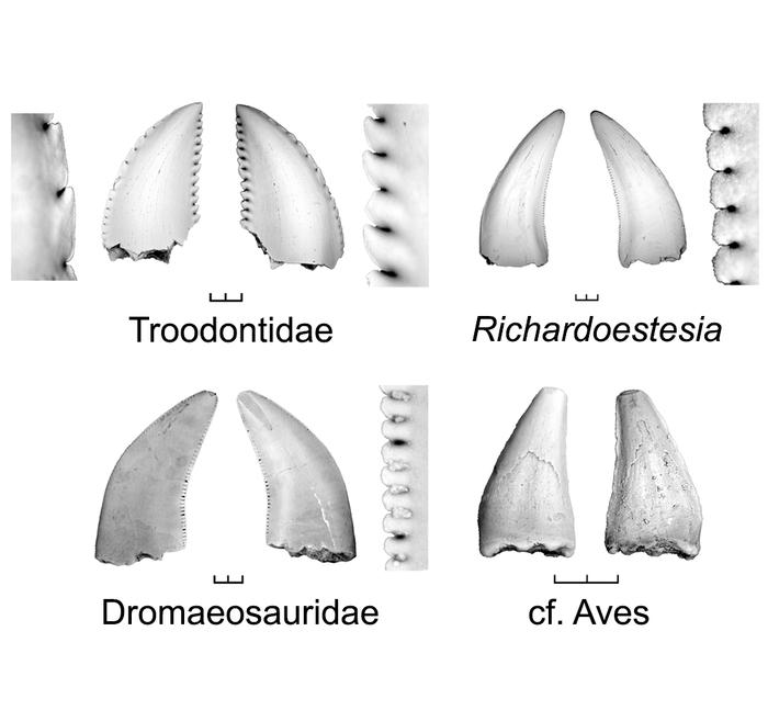 serrated and toothless beaks of bird ancestors in current biology