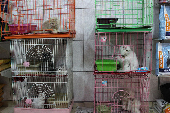 Cats are piled into tiny cages in one of Amman's many downtown pet stores. (Amy Collins)