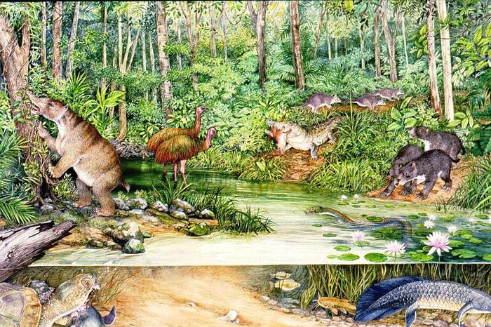 Cleaver-headed Crocodile in Riversleigh forest 24 million years ago
