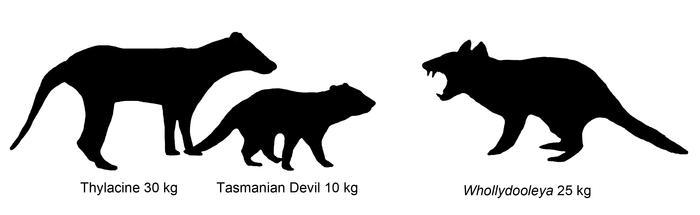 comparison of carnivorous marsupials