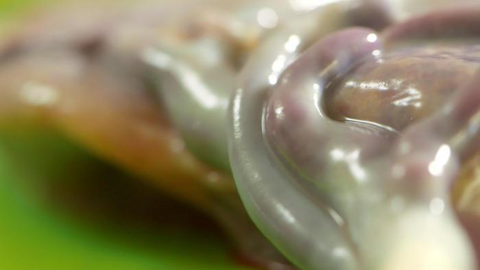 Placenta close up