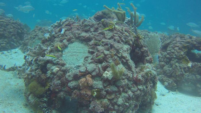 coral reef pods
