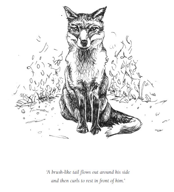 Heidi Everett's illustration of her friend, Fox.