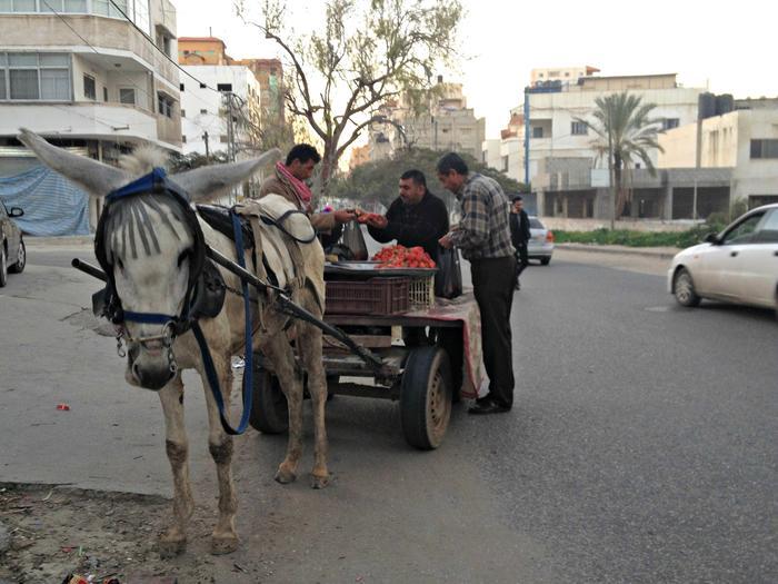 Shopping for Gaza strawberries