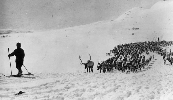 A view as two skiers herd Reindeer in Lapland,Sweden. (Photo by Hirz/Archive Photos/Getty Images)