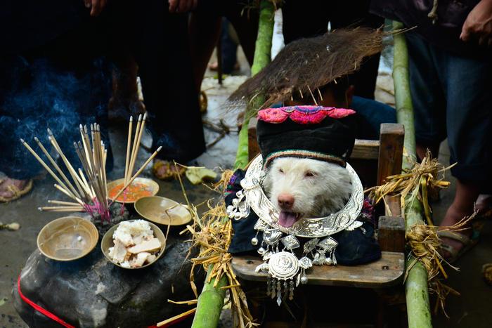 Miao People Honor Dogs In Folk Festival